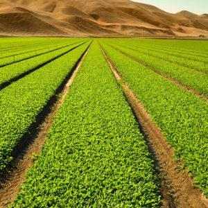 Según el ministro de Agricultura, el sector citrícola tiene futuro