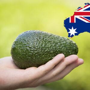 Un nuevo informe muestra tendencias positivas para el sector australiano del aguacate